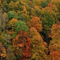 Pădurile seculare din România în fotografii