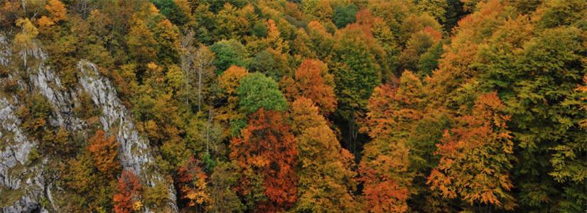 Rumänische Nationalparks in Bildern